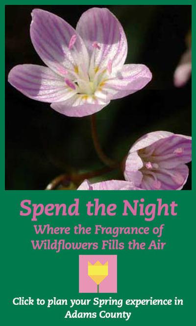 SIDEBAR AD Spring Wildflowers