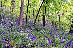 Highland Nature Sanctuary/The Arc of Appalachia Preserve