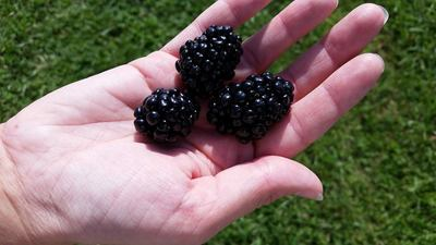 B & D Berry Farm