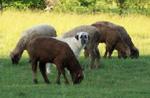 Locust Hill Farm Wool Products